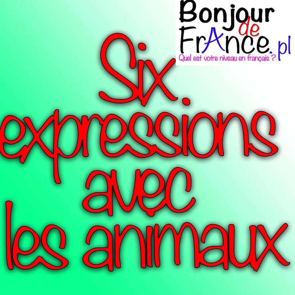 Six expressions avec les animaux