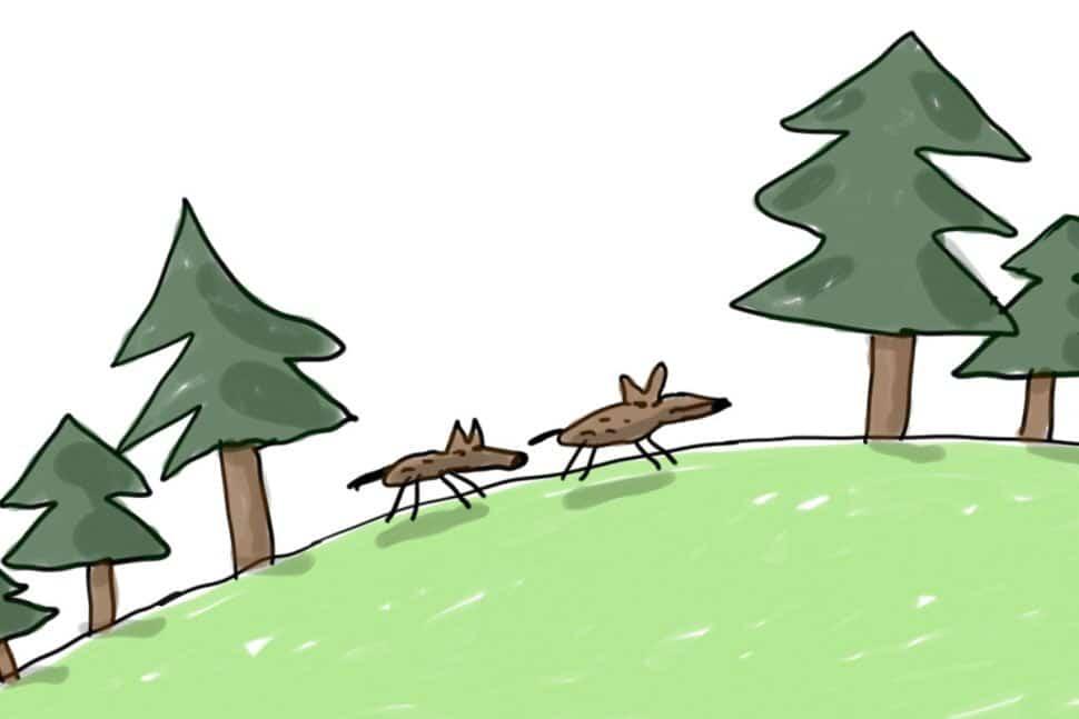 histoire de loups